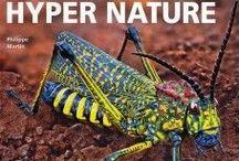 Animal Kingdom / Wildlife Nature