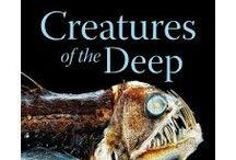 Under the Sea! (Sea Creatures) / sea creatures, sharks, aquatic life