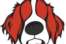 Zahra welsh springer spaniel / Nieuwe puppy