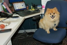 Bring Your Dog to Work / by MadCap Software