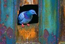 birds / All sorts of beautiful birds