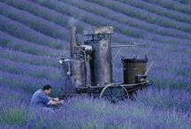 Provence / A board for provençal pictures