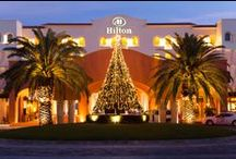 happy holidays. / The holidays are a truly magical time at Hilton Los Cabos Beach & Golf Resort.