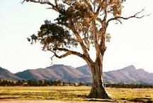 Treehugger / tree love