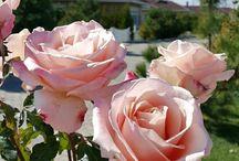 #FlowersShowers