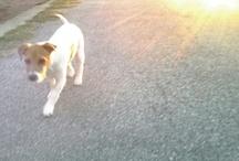 Puppy Love mwah :-D