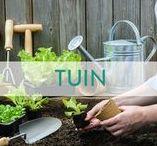 Libelle - Tuin / Vrolijk je tuin op met deze leuke tips! https://www.libelle.be/thuis/