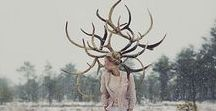Other Human animals (not Burning Man)*(