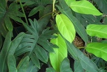 Lovely Plants / http://www.ebay.com/usr/urgoodbuyz