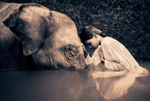 beguiling images / by Nicki Williams
