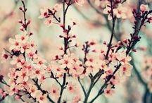 / Nature's beauty