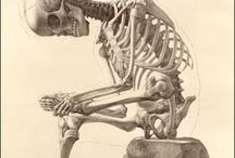 Skeletons from the Shelves / Skeletons in NLM's historical anatomical atlases show off contemporary art and science