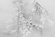 season - the winter