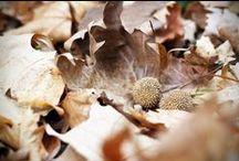 season - the autumn