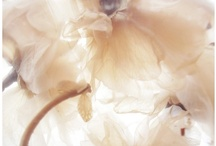 colors - ivoire (cream & ivory) / vintage, romance, organic / by kelly sauer | exquisitrie