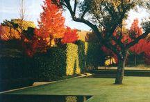 Gardens/Landscapes