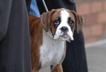 Pet Portraits / Brett Jacques Photography Pet Portraits
