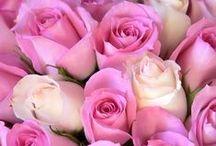Roses (donnez-moi des roses!) / by Hélène Fredette