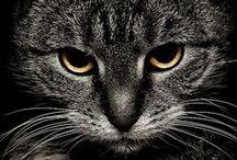 Посмотри в мои глаза...