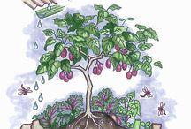 Permacultur gardening