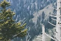 Hiking / Come Experience The Great Smoky Mountains!