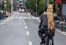 Kerékpáron :)