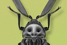 ♣ Creature Design: Bugs / Insects for Design