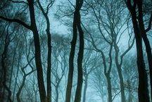 ☁Env. Design: Woods