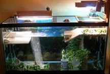 Turtle Tanks / Some ideas what i can to for my little Kröti :D