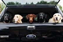Built Ford RUFF! / Dogs & their Fords.
