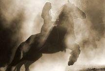 amazing creatures / Horses