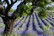 Provence Landscapes / Travel and Design inspiration from the South of France