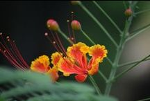 FLOWERS AND PLANTS / Exotic flowers and plants