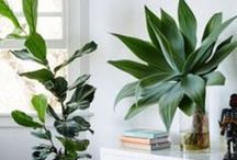 •✗• GREEN THUMB / Introducing greenery into the home will have you relaxing in an instant.