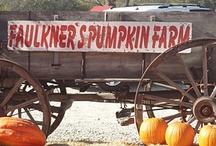 Faulkner's Pumpkin Farm / by Faulkner's Ranch Events
