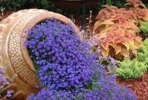 Gardening/Outdoors / by Phyllis Tieri