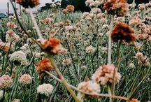Country dreaming / The life I dream of living one day. A simple one in a place surrounded by nature. Scooping armfuls of wildflowers, creating gorgeous meals to be enjoyed outdoors, enveloping yourself in a peaceful life in the country. Dream with me?