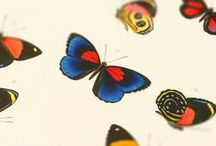 Vintage butterfly wall art and home decor / Butterflies, summer and classy interiors