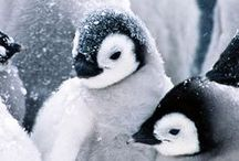 Penguins / Sooo cute!