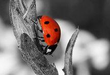 LadyBugs / Mijn lievelingsdier.