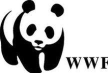 WWF Scuola / Nasce nel 2002 la lunga, significativa collaborazione del WWF con la storica azienda Franco Cosimo Panini Editore. Una collaborazione ampia e strutturata che ha consentito di penetrare nel mondo dei più piccoli sensibilizzandoli alle tematiche di respiro ambientale e a un grande amore per la Natura. Le agende, i quaderni, gli zaini e tutti gli altri articoli della linea cartotecnica diventano cosi veicolo di comunicazione di messaggi fortemente educativi.