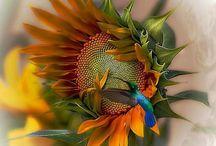 ☪花朵 flower