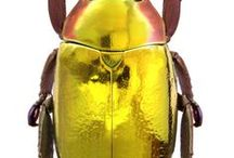 Amazing colourful  insects beetles etc / natures colorful pallet living jewels