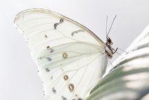 Butterflies / Magnifiche farfalle