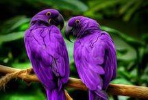 Proud Parrots