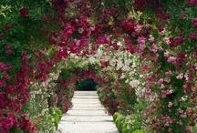 Backyard Garden Ideas / by Kimberly Joy