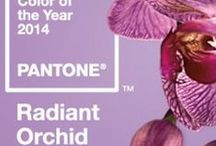 Pantone 2014 orchidée