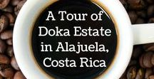 A Tour of Doka Estate in Costa Rica / Love coffee? Then come on a photographic tour of one of Costa Rica's best known coffee plantations where you'll learn what it takes to make the drink of the Gods!
