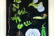 Natuurprenten / bloemen , planten , beestjes / by Bianca Brouwers