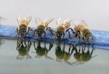 Natura / buburuze si albine
